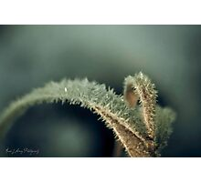 Frosted Photographic Print