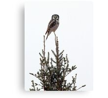 Nature's Christmas Tree Topper ;) Canvas Print