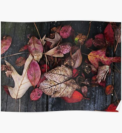 Collage Of Autumn Red Poster
