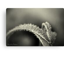 Black Frost Canvas Print