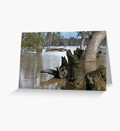 Fallen trees at flooded Poocher Swamp Greeting Card