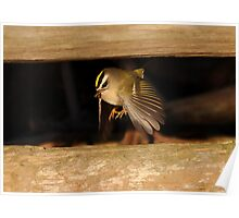 Kinglet with Prey Poster