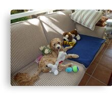 Buddy Guarding His Toys Canvas Print