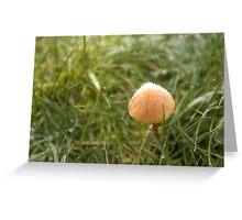 Frost in the Mushroom Kingdom Greeting Card