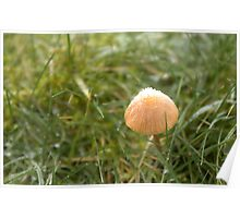 Frost in the Mushroom Kingdom Poster