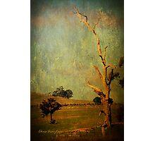 The dead tree ... Photographic Print