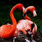 Pretty Flamingo by AnnDixon