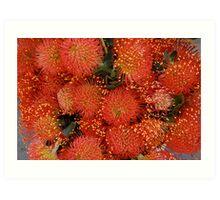 Red Proteus Flowers, Santa Barbara market Art Print