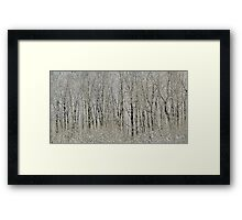 Melodies of the Woods Framed Print