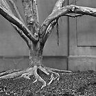 Leafless, but alive- tree overtaken by structures by mypic