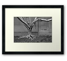 Leafless, but alive- tree overtaken by structures Framed Print