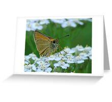 Dion Skipper yarrow blossoms Greeting Card