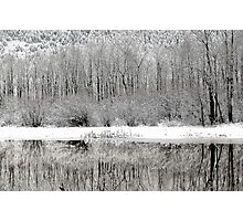 Winter Whites  Photographic Print