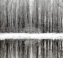 Whites of Winter  by Annie Lemay  Photography