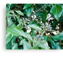 Evergreen Winter Leaves Canvas Print