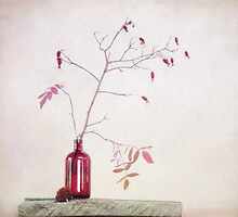 Wild rosehips in a bottle by Priska Wettstein