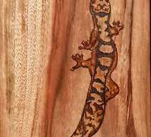 Australian Fat-tail Gecko by aussiebushstick