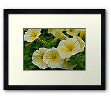 Yellow Petunias Framed Print