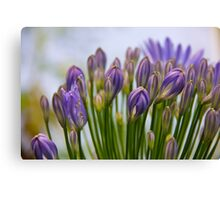 Blooms of love Canvas Print