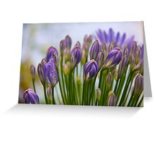 Blooms of love Greeting Card