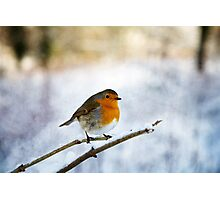 Robin in the Snow Photographic Print