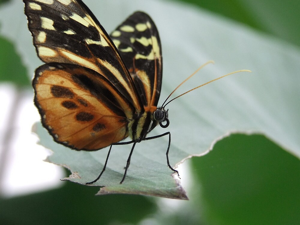 butter fly on leaf by adam63745