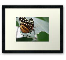 butter fly on leaf Framed Print