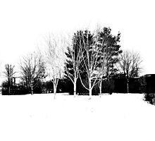 snow black and white Photographic Print