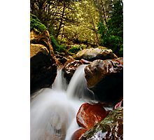 Small Fall Photographic Print