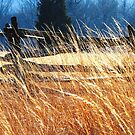 A Year in Gettysburg by AngieDavies