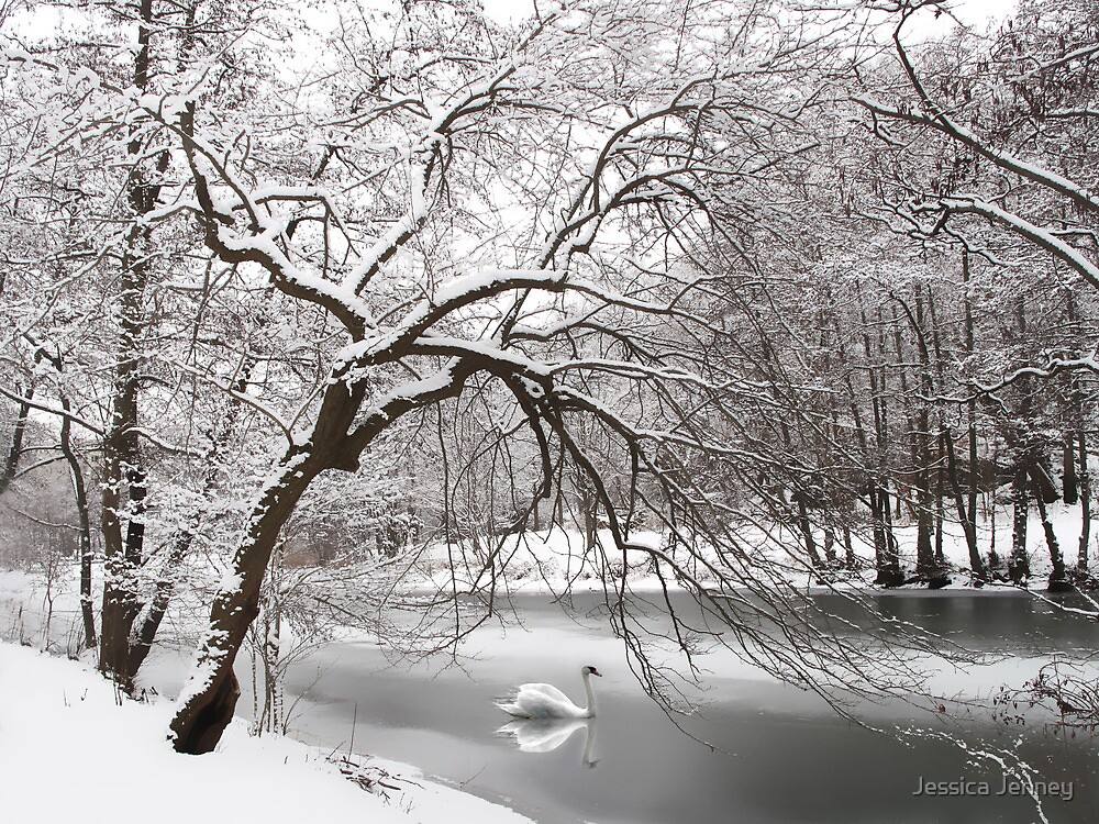 Silver Swan by Jessica Jenney