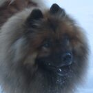 Eurasia Dog in the Snow by stevenw888