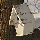 Bird House by grrizzly