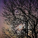 Winter's Tree by Oli Johnson
