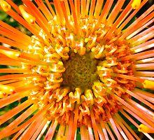 Orange star  by Ali Brown