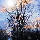 Winter Tree by teresa731