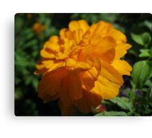 Orange macro in the wintertime  Canvas Print