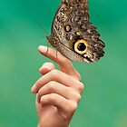 Giant butterfly by ammit