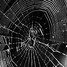 Spider's Web by evilcat