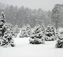 Winter Wonderland by Sharon Woerner
