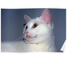 Kitten-like Poster