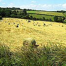 Rural Landscape : Hay field in Cornwall by magicaltrails