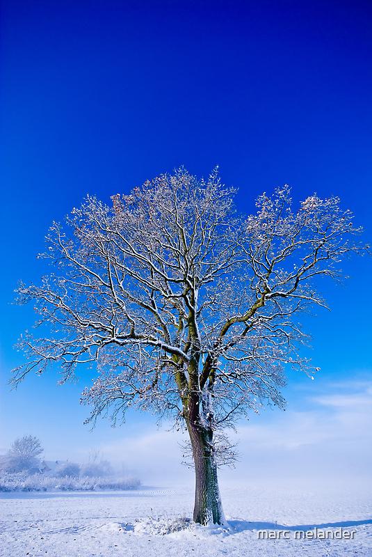 Snowlight by marc melander