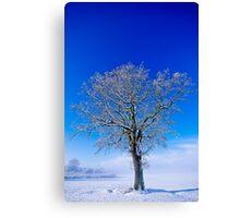 Snowlight Canvas Print