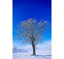 Snowlight Photographic Print