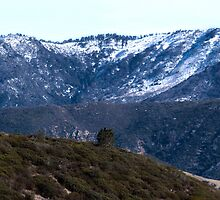 California Central Coast Snow by Renee D. Miranda