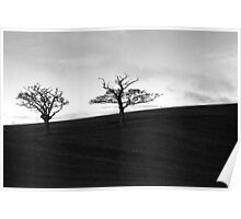 Two Tree Hill Panorama Black & White Poster