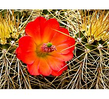 Beauty Among the Spines Photographic Print