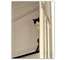 Scaredy Cat - Max Photographic Print