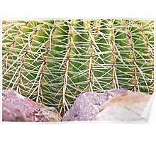 Prickly!!  Poster